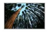 Fisheye Lens For Pentax photos