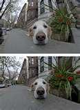 Nikon Fisheye Lens photos