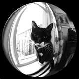 photos of Fisheye Lens Adapter